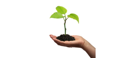 Plant growing in palm of a human hand: How to do marketing as a start-up