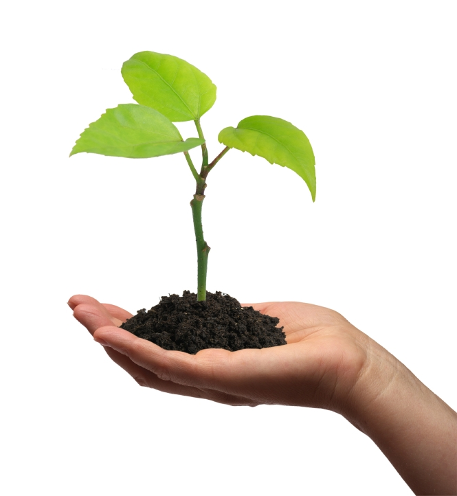 Plant growing in the palm of your hand: How to build effective relationships with SMEs