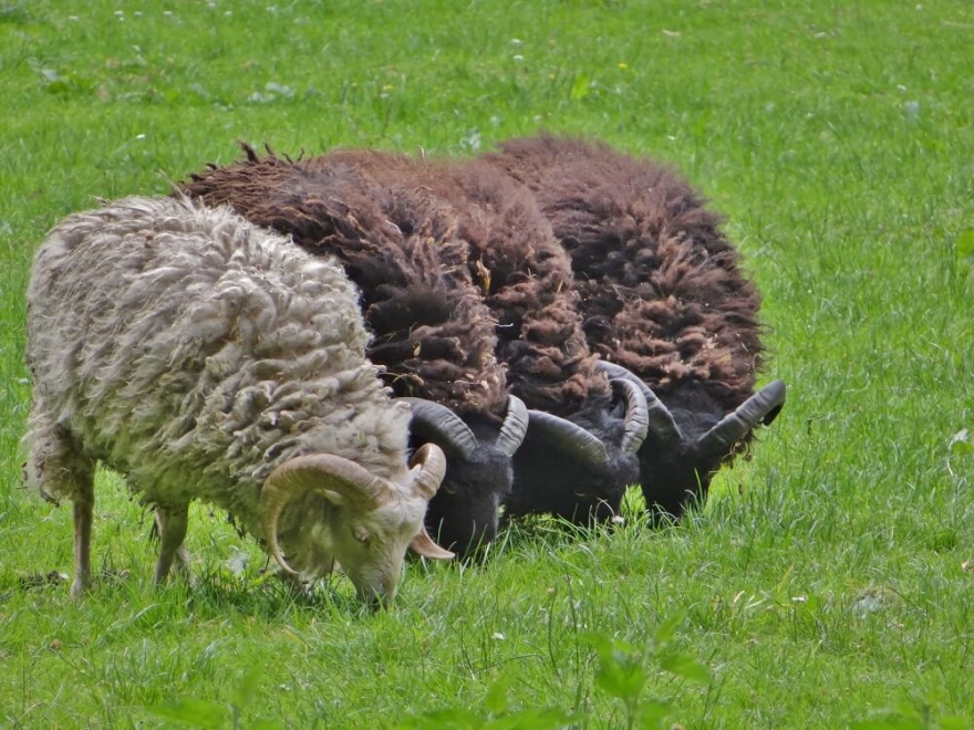 Image of sheep - how to write client case studies that stand out